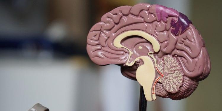 Otkriven lijek protiv Alzheimerove bolesti?!