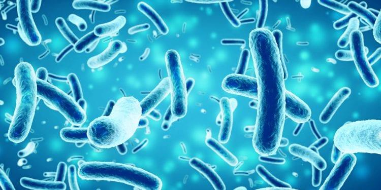 Šta je salmonela, kako se prenosi i kakve posljedice ostavlja na organizam