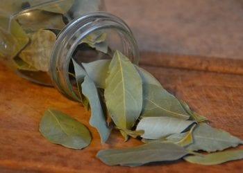 Prirodni lijek iz kuhinje Lovorov list zaustavlja i najuporniji kašalj
