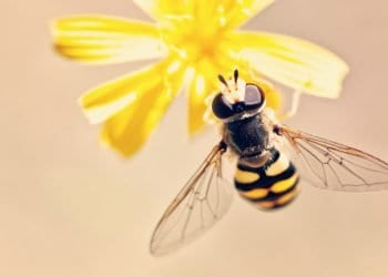 Proljeće kuca na vrata, kako se zaštiti od alergijski reakcija?