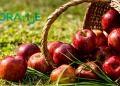 jabuka-naslovnica-ezdr